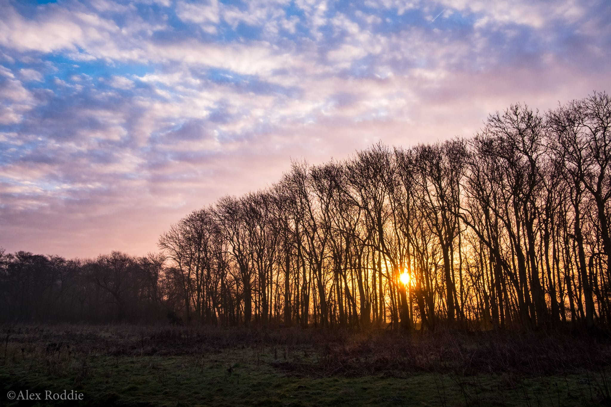 Sunrise at the edge of the wood