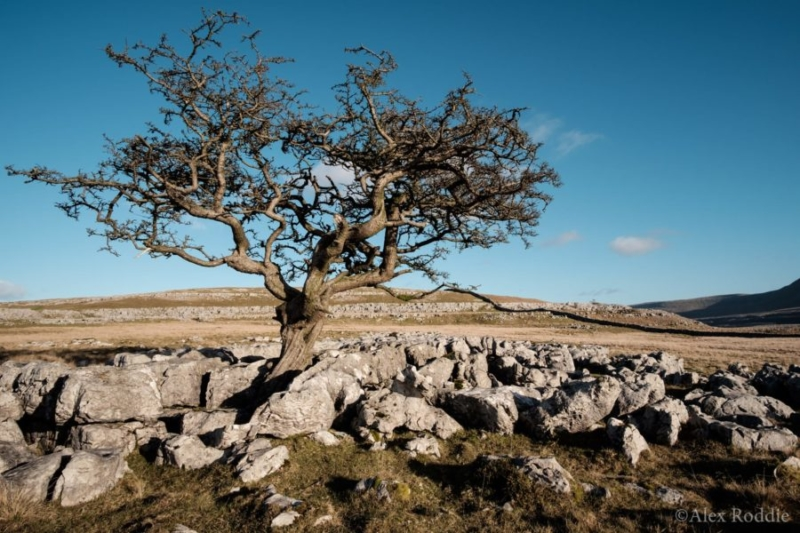 Great Whernside, Yorkshire Dales