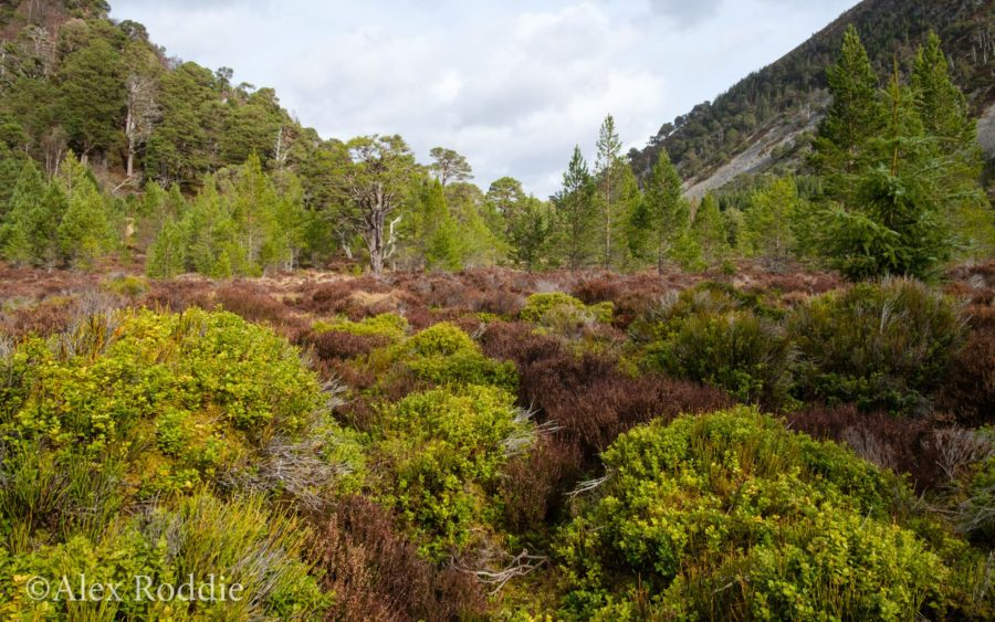 Ryvoan Pass, Cairngorms