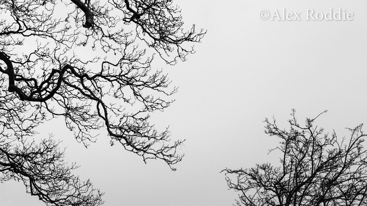 This month, I've been fascinated by tree silhouettes and the shapes they draw against the sky