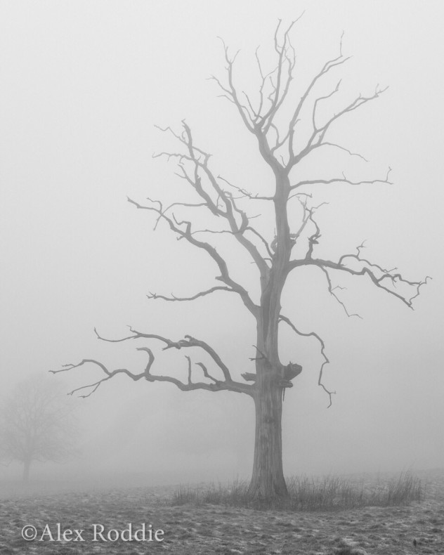 The Poet on a sombre morning of freezing fog