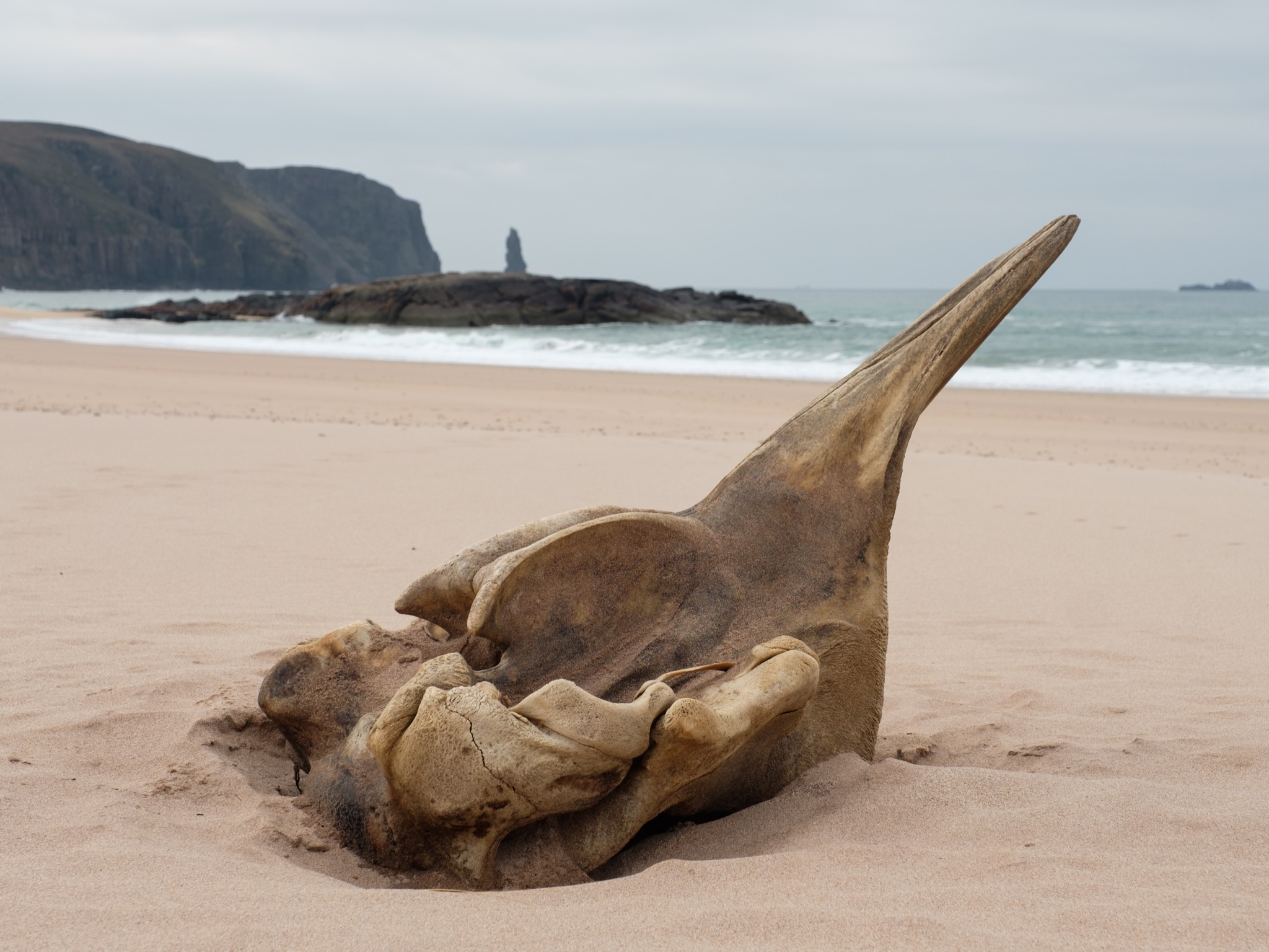 This whale skull on Sandwood Bay prompted a bit of soul-searching.